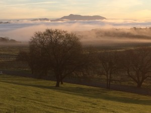 morning fog at the bishops ranch