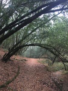bishops ranch trail