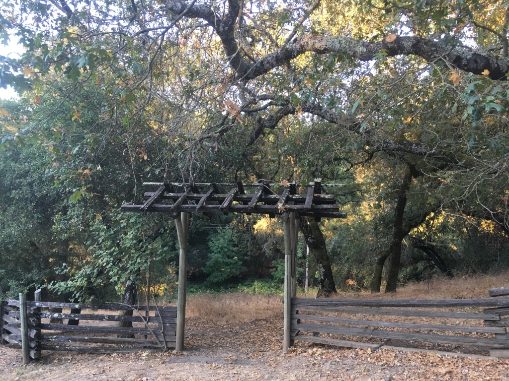 An old wooden gate under huge Live Oak Trees leading into trails